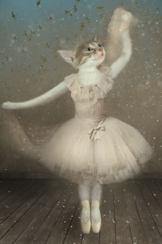 картинки кошка балерина