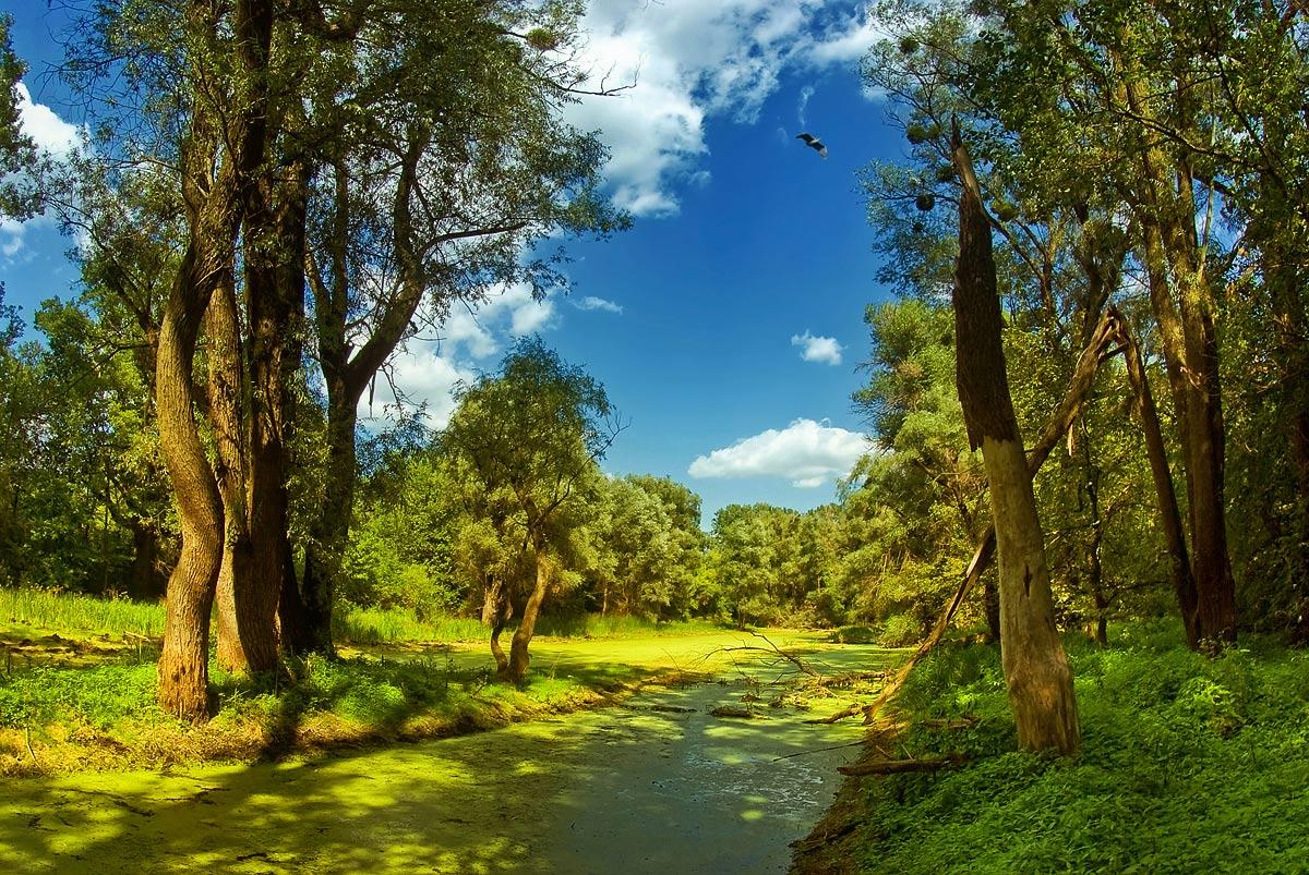 """фото """"В болотных дебрях Святогорья..."""" метки: пейзаж, лес, лето"""