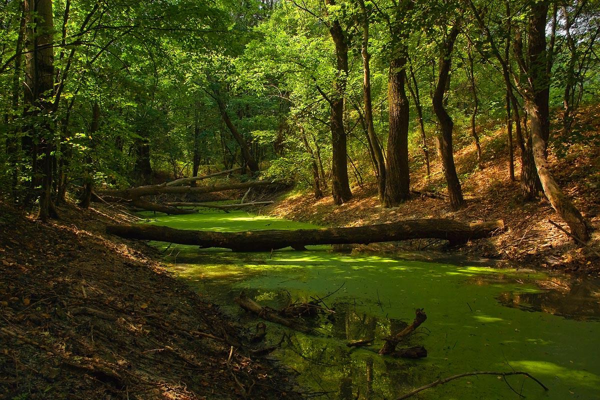 """фото """"Снова в гости к лешему"""" метки: пейзаж, лес, лето"""