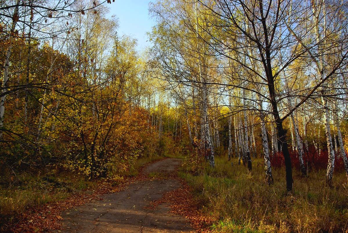 """фото """"Ещё осенняя..."""" метки: пейзаж, осень"""
