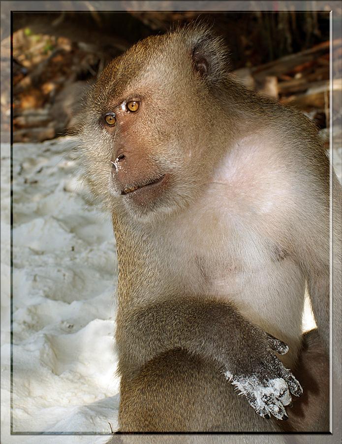 """фото """"Припудрила носик"""" метки: природа, путешествия, Азия, дикие животные"""