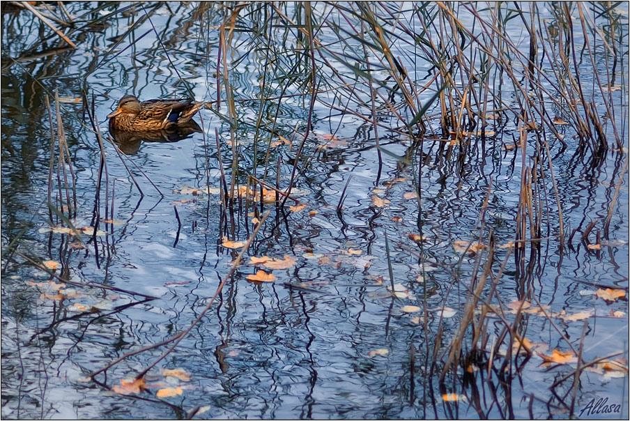 """фото """"Уединение"""" метки: пейзаж, природа, вода, дикие животные"""