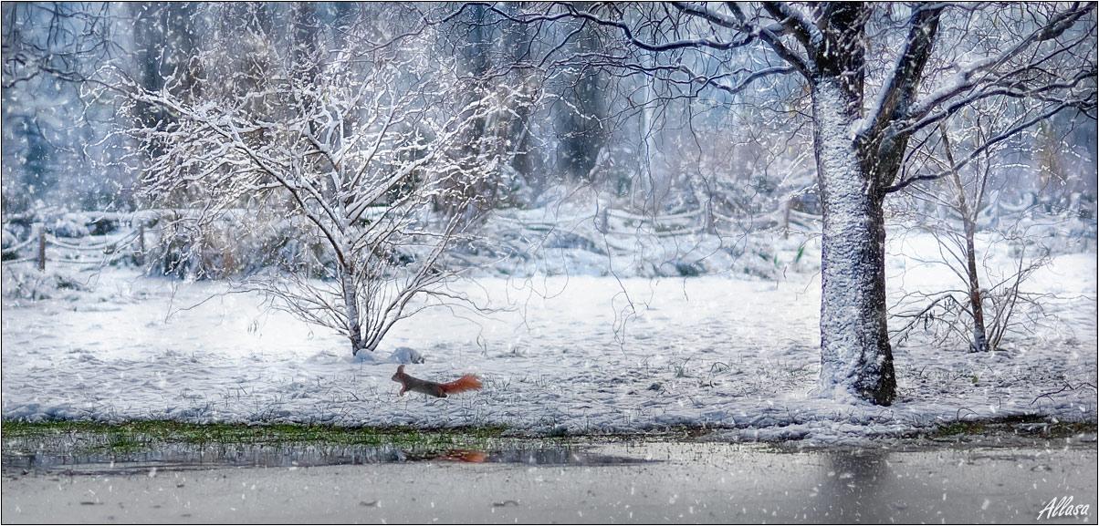 """фото """"Страничка из Зимней сказки"""" метки: пейзаж, природа, дикие животные, зима"""