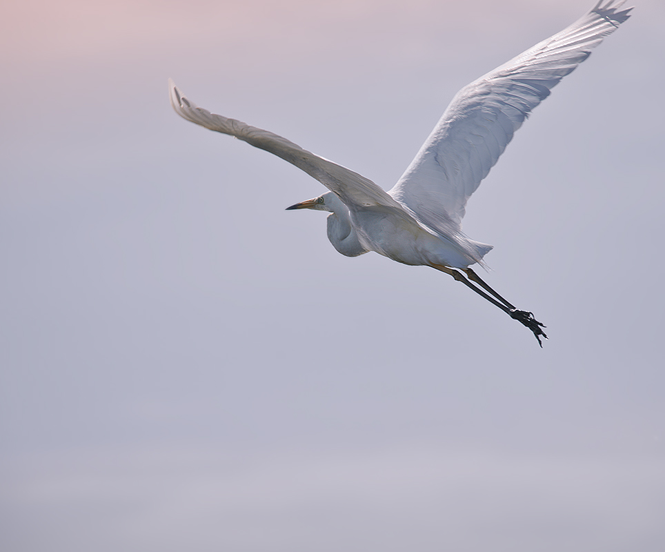 """фото """"К солнцу"""" метки: природа, дикие животные"""