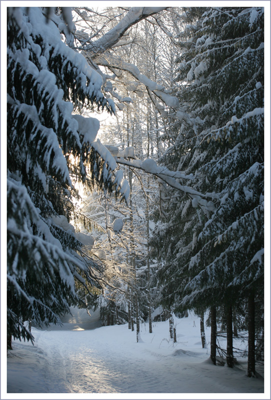 "фото ""Гуляя по лыжне. -28* на солнце"" метки: пейзаж, зима"