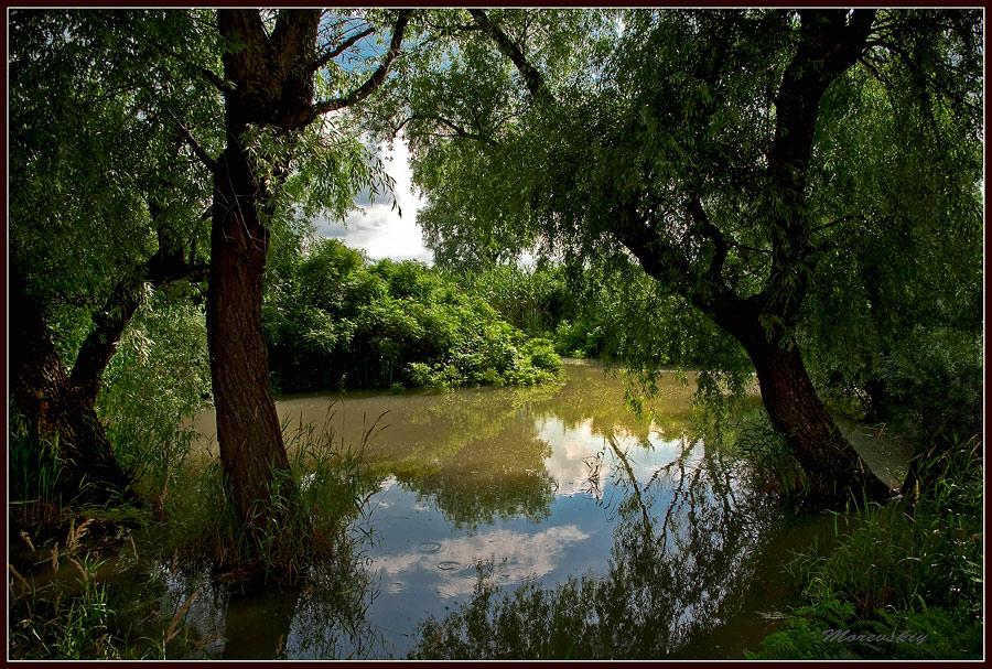 "фото ""Река Курва"" метки: пейзаж, вода"