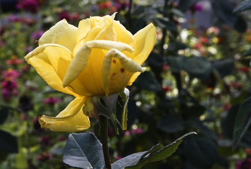 """фото """"Цветочная 141."""" метки: природа, цветы"""