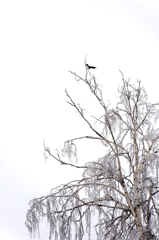 """фото """"черно белые"""" метки: пейзаж, зима"""