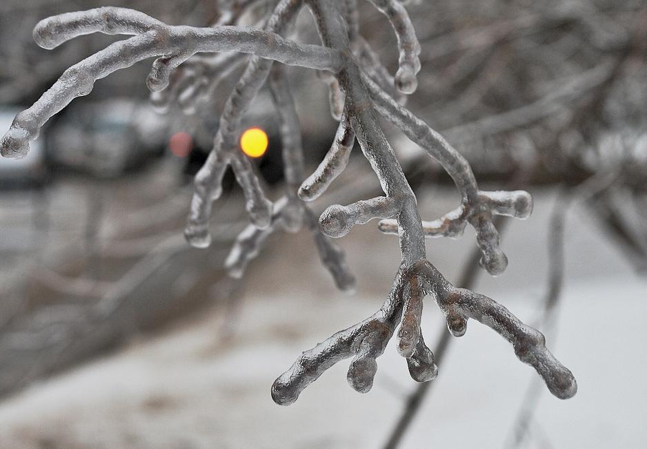 """фото """"...Мороз -воевода дозором обходит владенья свои..."""" метки: природа, фрагмент, цветы"""