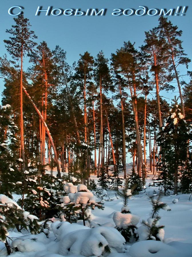"""фото """"С Новым годом!!!"""" метки: пейзаж, закат, зима"""