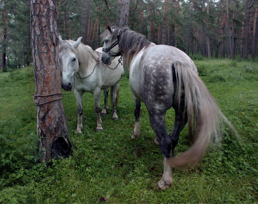 """фото """"привязанность"""" метки: природа, домашние животные"""