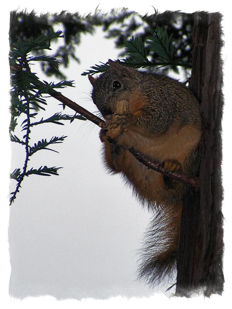 "фото ""Looking at you"" метки: природа, дикие животные"
