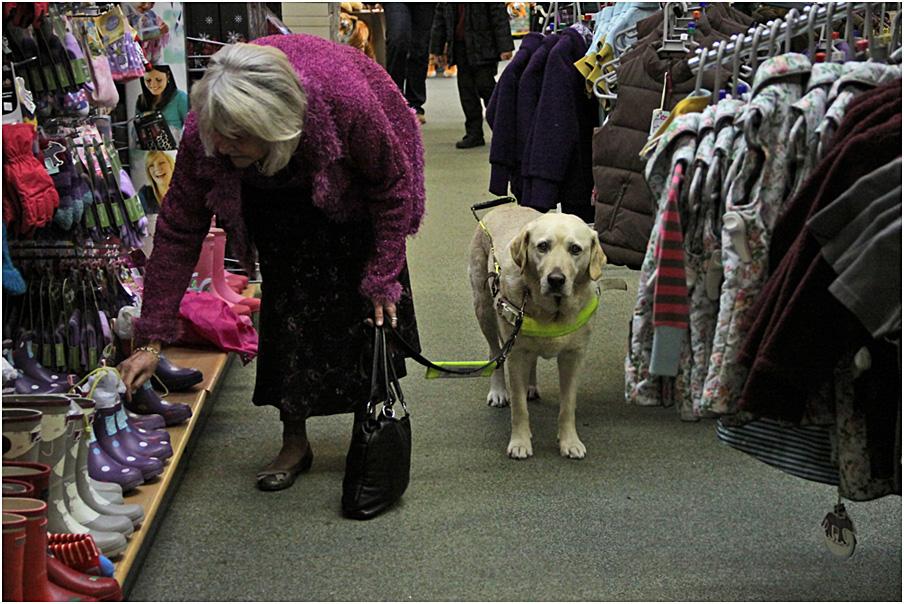 """фото """"Собачья работа."""" метки: природа, репортаж, домашние животные, собака"""