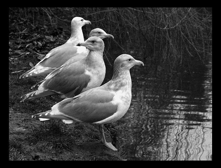 """фото """"Four brothers"""" метки: природа, дикие животные"""