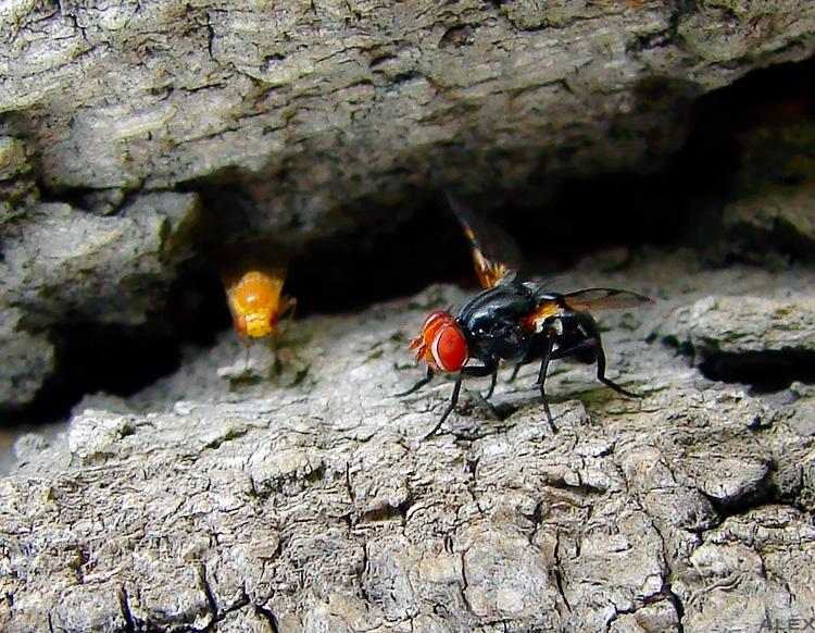 """фото """"встреча..."""" метки: природа, макро и крупный план, насекомое"""