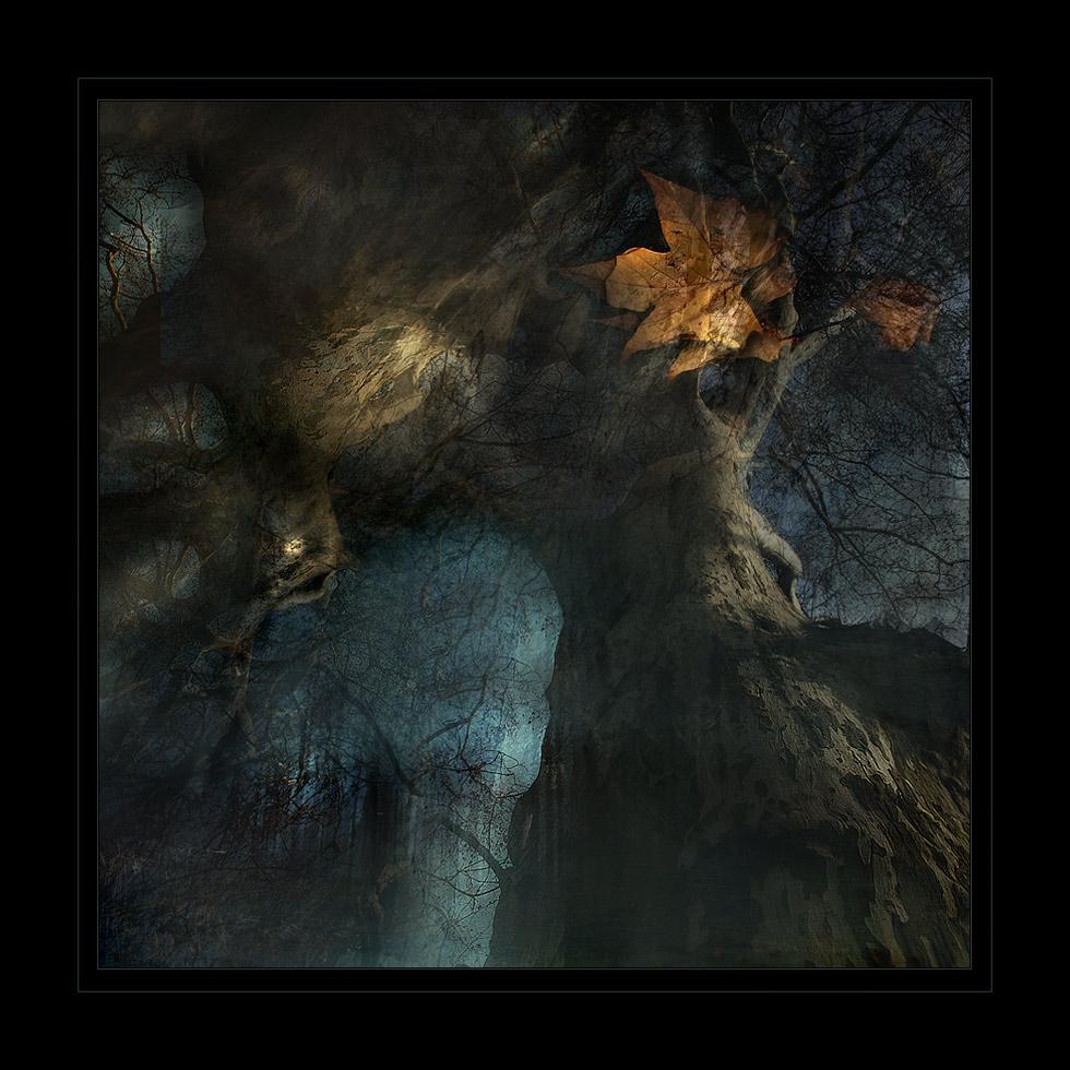 "фото ""Mystery Forest"" метки: фотомонтаж,"