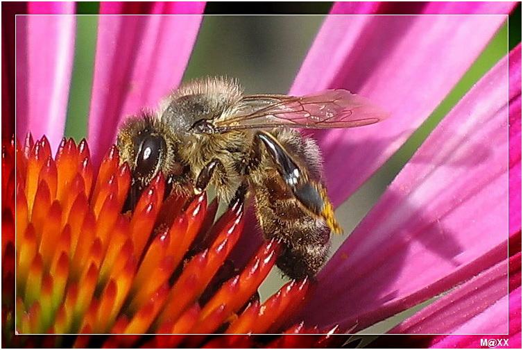"""фото """"#"""" метки: природа, макро и крупный план, насекомое"""