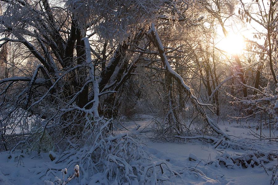"фото ""Мороз и солнце."" метки: пейзаж, зима"