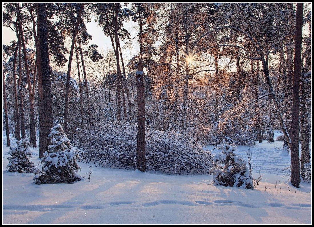 """фото """"в ледяной паутине ветвей"""" метки: пейзаж, зима, лес"""