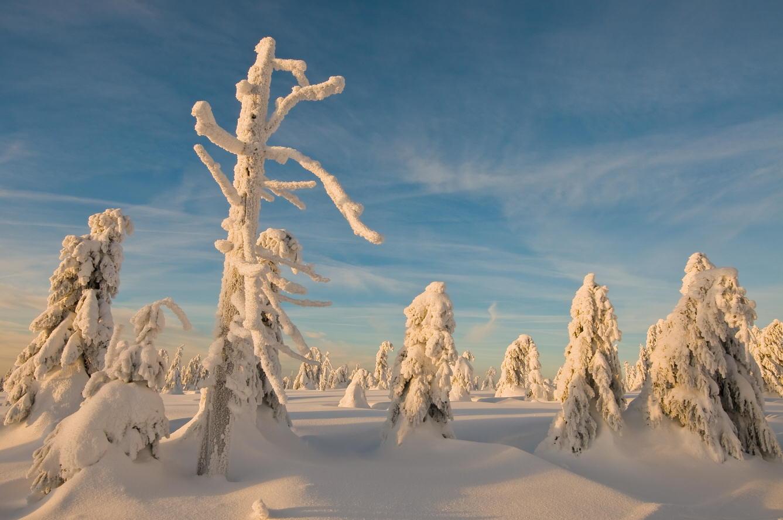 "фото ""White desert"" метки: пейзаж, зима"