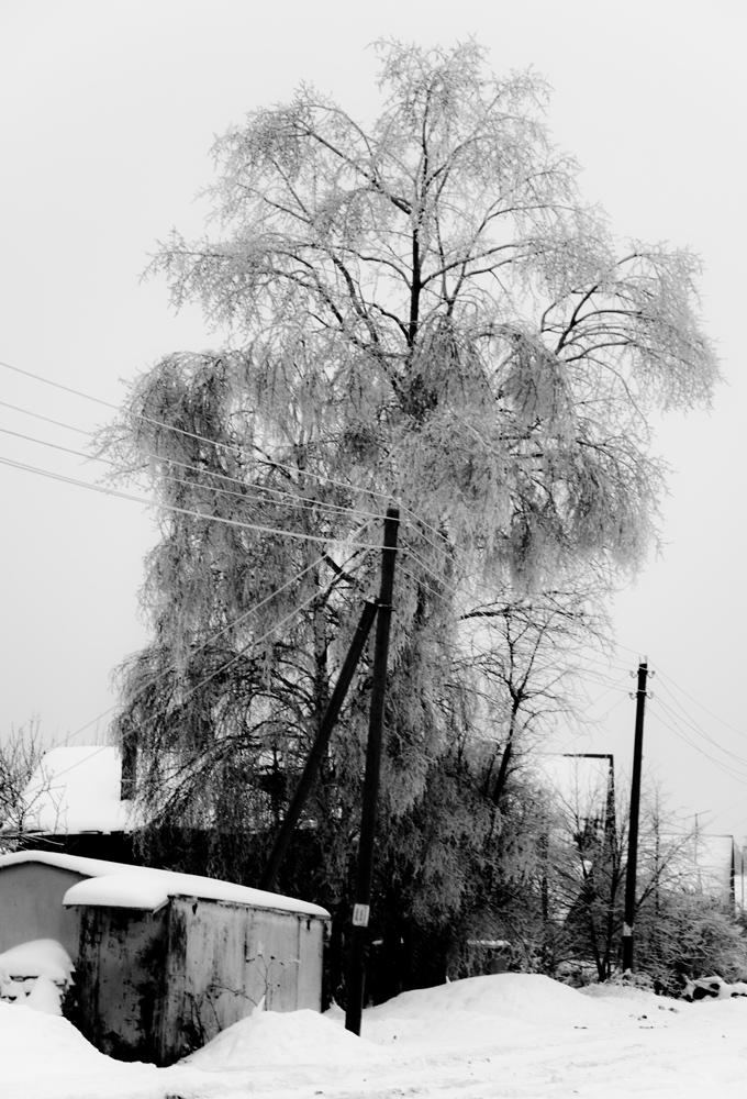 "фото ""Деревенский великан"" метки: пейзаж, зима"