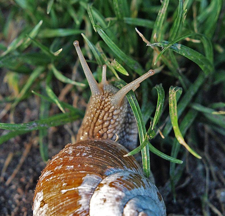 """фото """"Snail"""" метки: макро и крупный план, природа, дикие животные"""