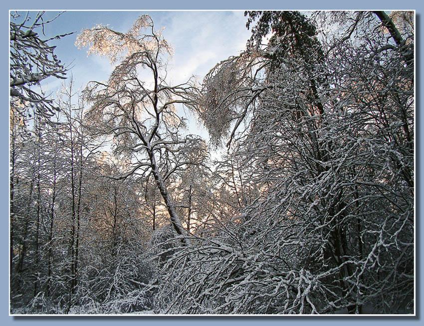 """фото """"В конце дня"""" метки: пейзаж, зима, лес"""