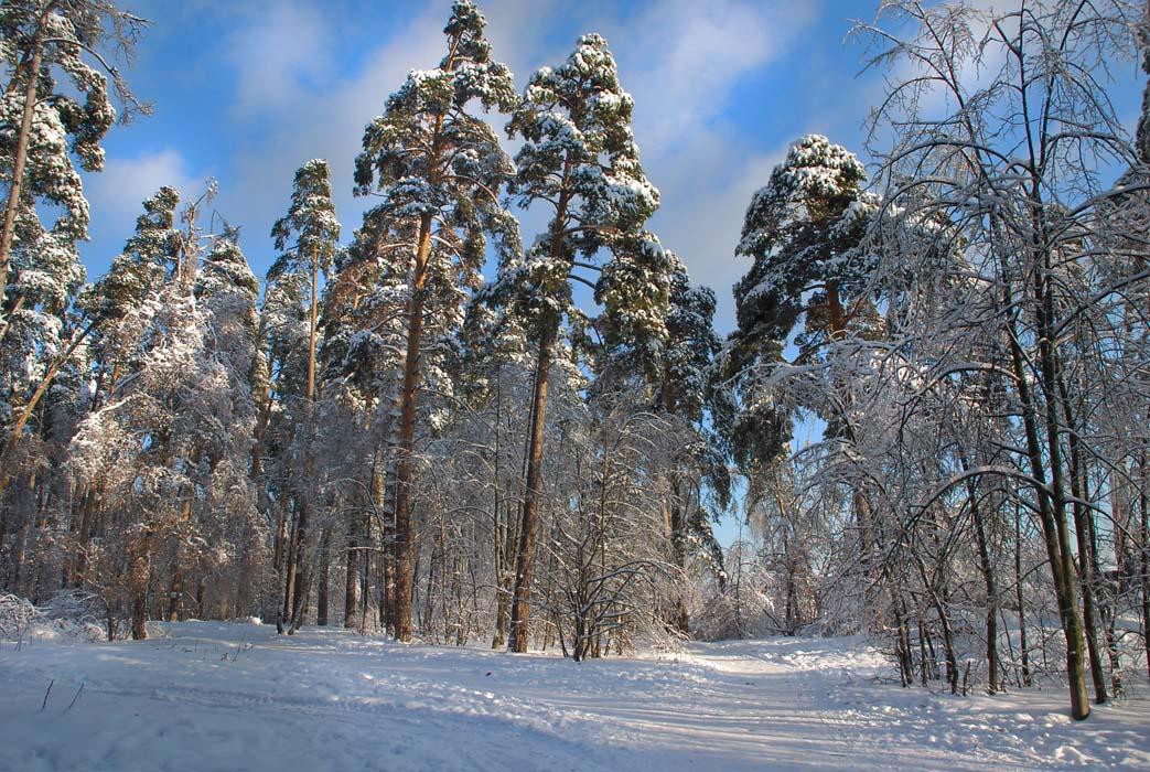 """фото """"зима"""" метки: пейзаж,"""