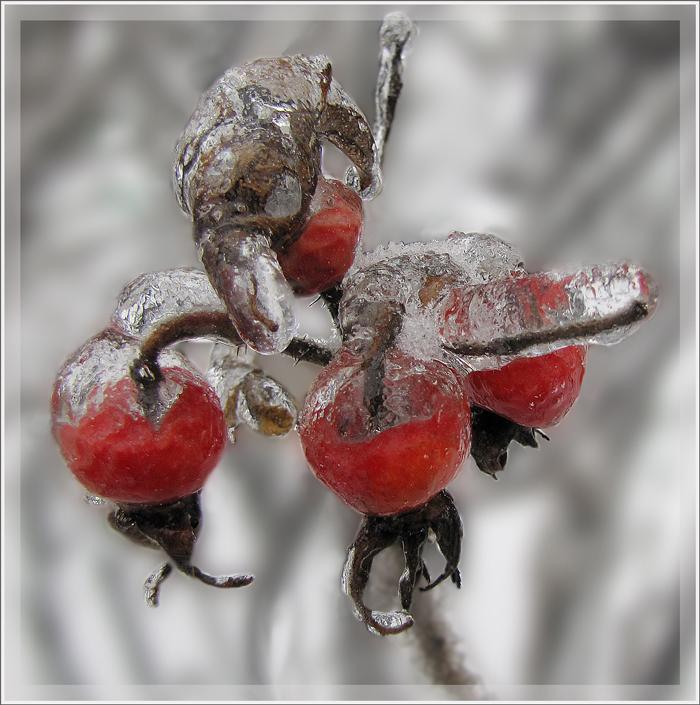"""фото """"Жизнь подо льдом"""" метки: природа, цветы"""