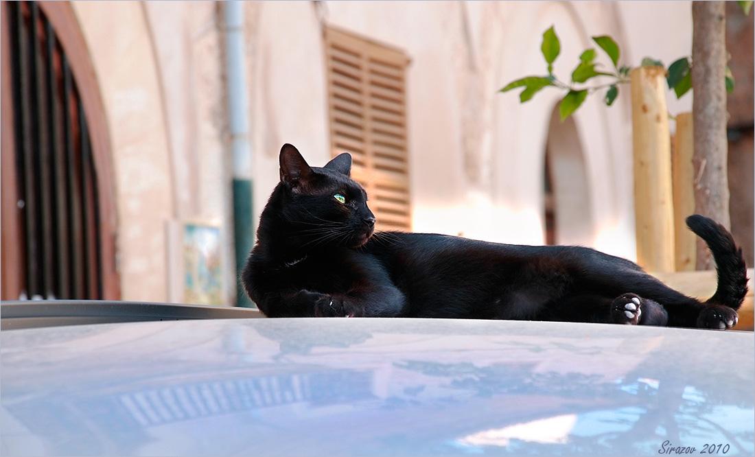 "фото ""Кошка на разогретой крыше"" метки: жанр, путешествия,"