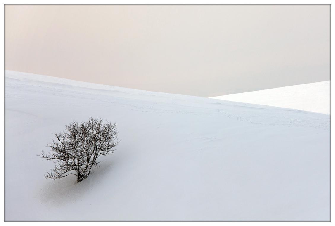 """фото """"The colors of the white"""" метки: пейзаж, зима"""