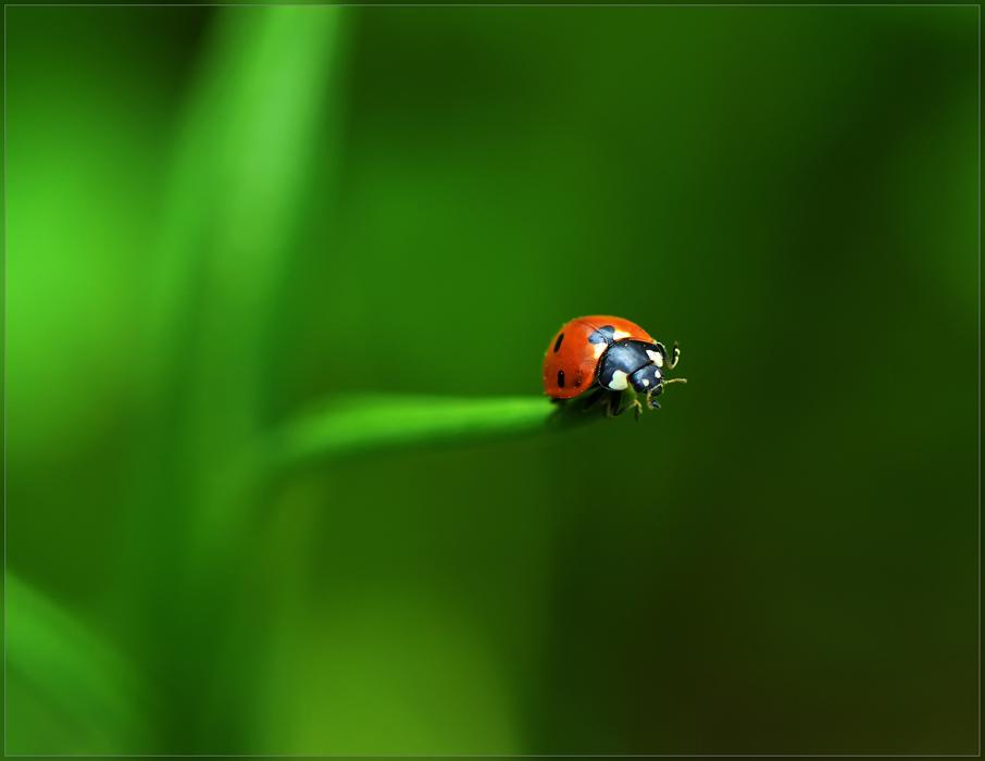 """фото """"Обитатель Зеленой планеты..."""" метки: природа, макро и крупный план, насекомое"""