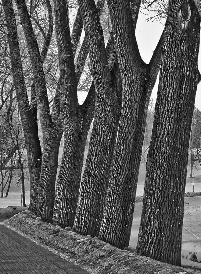 """фото """"Скособочились"""" метки: пейзаж,"""