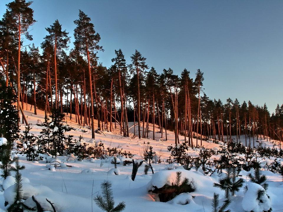 "фото ""Мороз и солнце..."" метки: пейзаж, зима, лес"