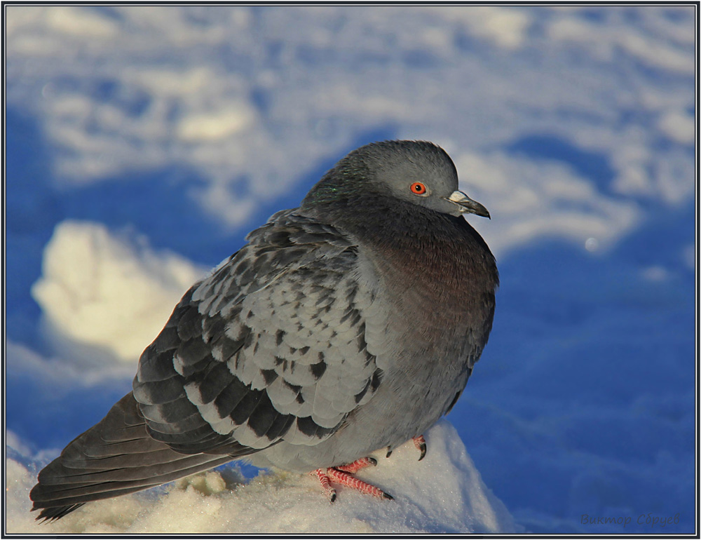 "фото ""Морозно..."" метки: природа, дикие животные"