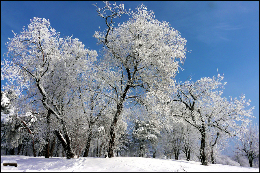 "фото ""Winter story"" метки: пейзаж, природа, trees, зима, снег"