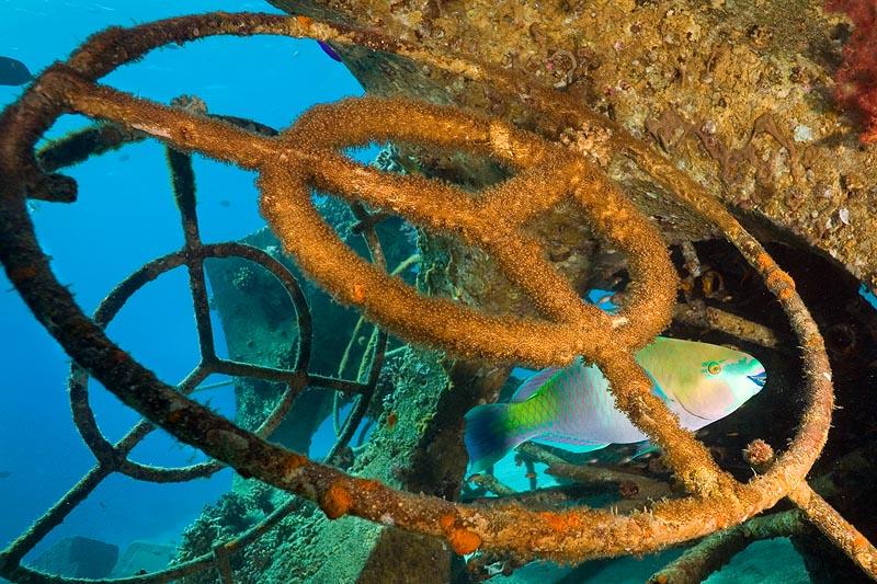 """фото """"Водитель """"Мерседеса"""""""" метки: подводные,"""