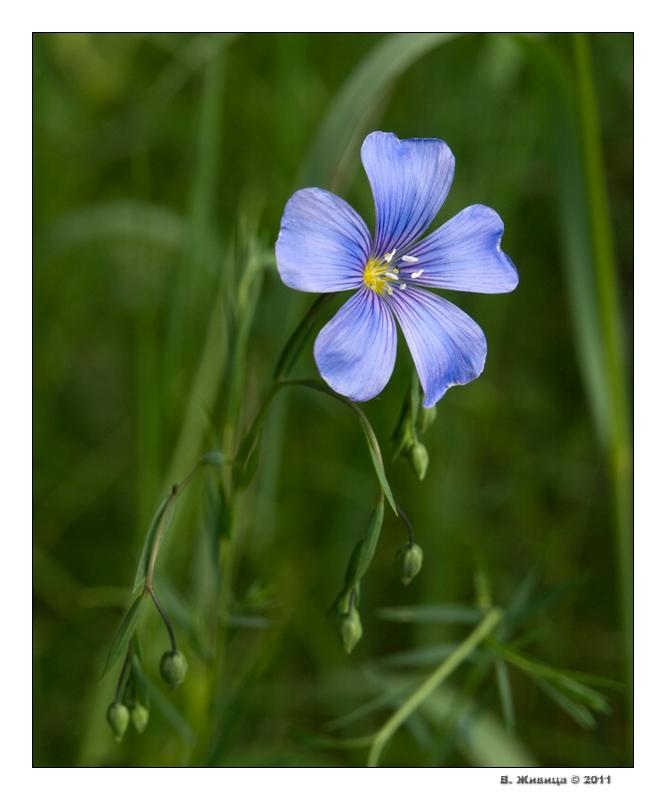 Природа макро и крупный план цветы