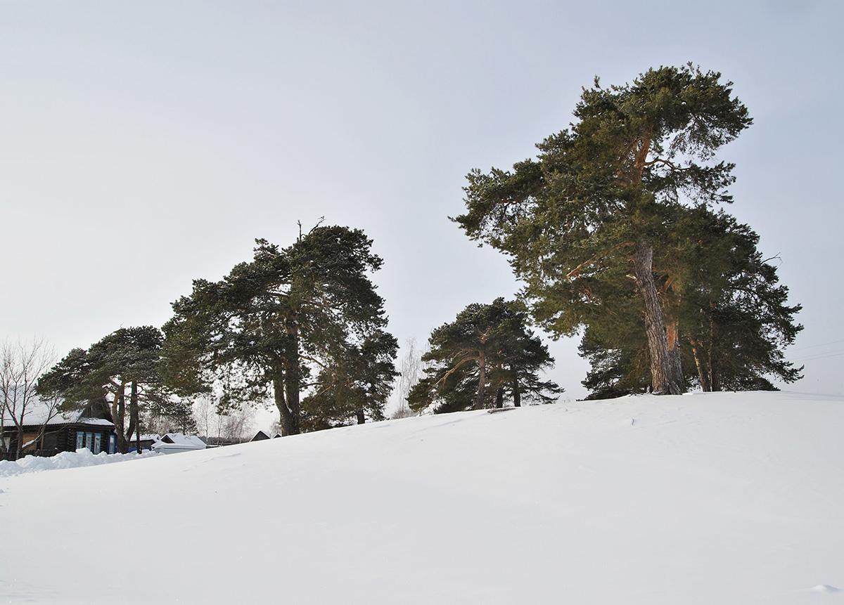 """фото """"Сёстры -близнецы"""" метки: пейзаж, зима"""
