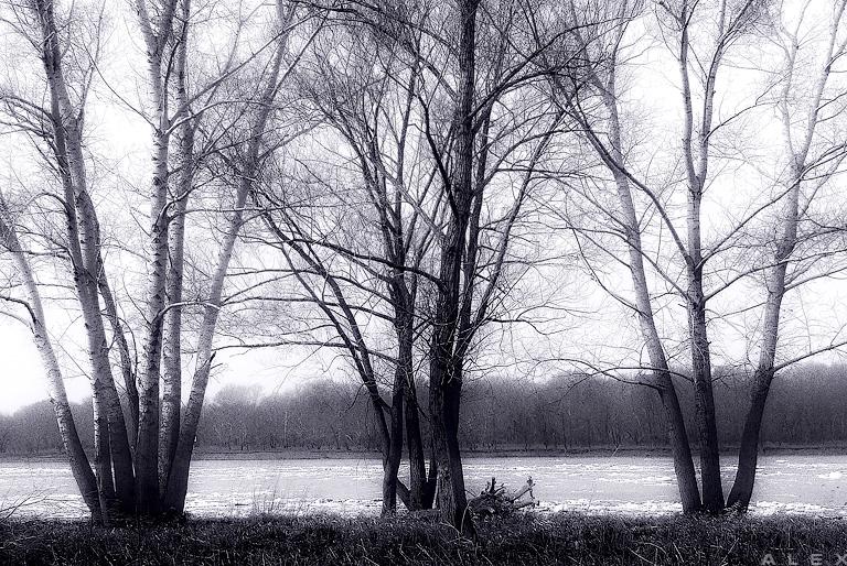 думаю, картинки ранней весны черно-белые медленно предсказуемо