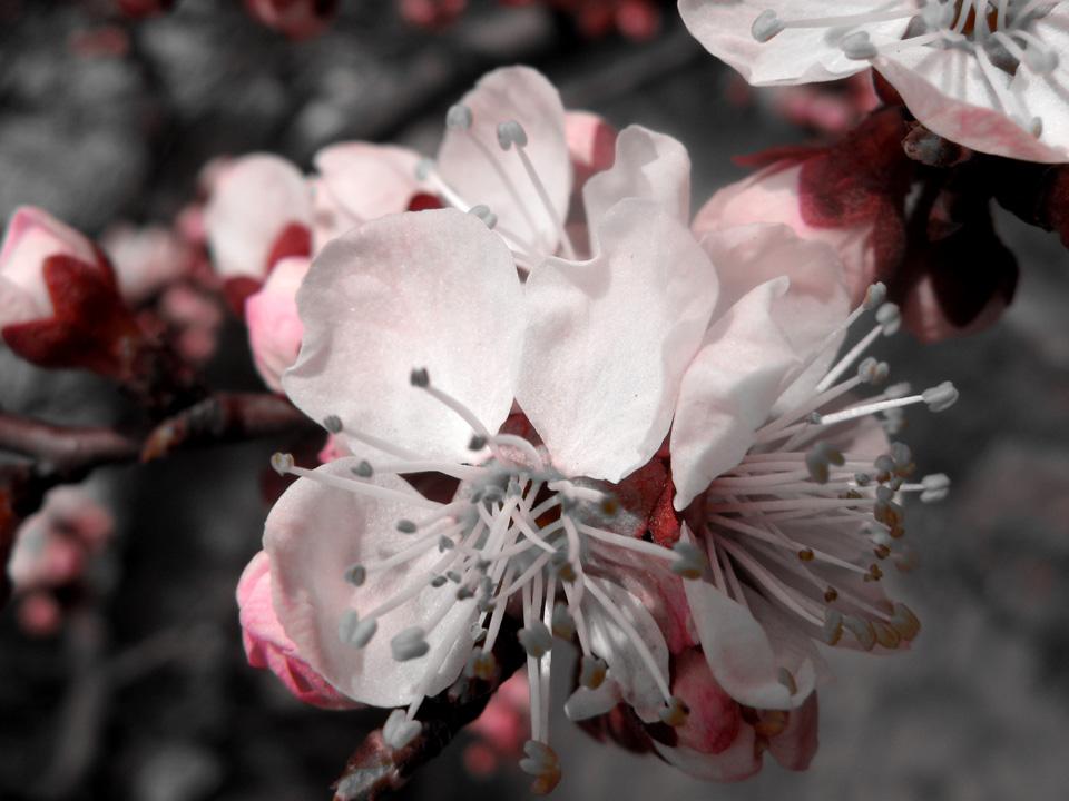 """фото """"***"""" метки: макро и крупный план, пейзаж, весна"""