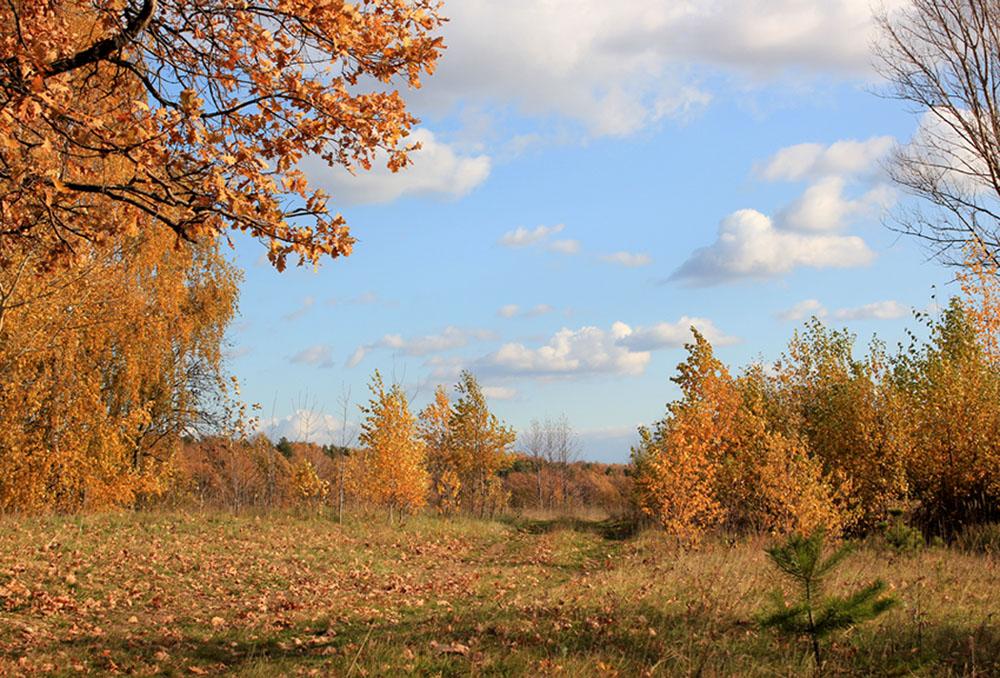 Осенние картинки октябрьские