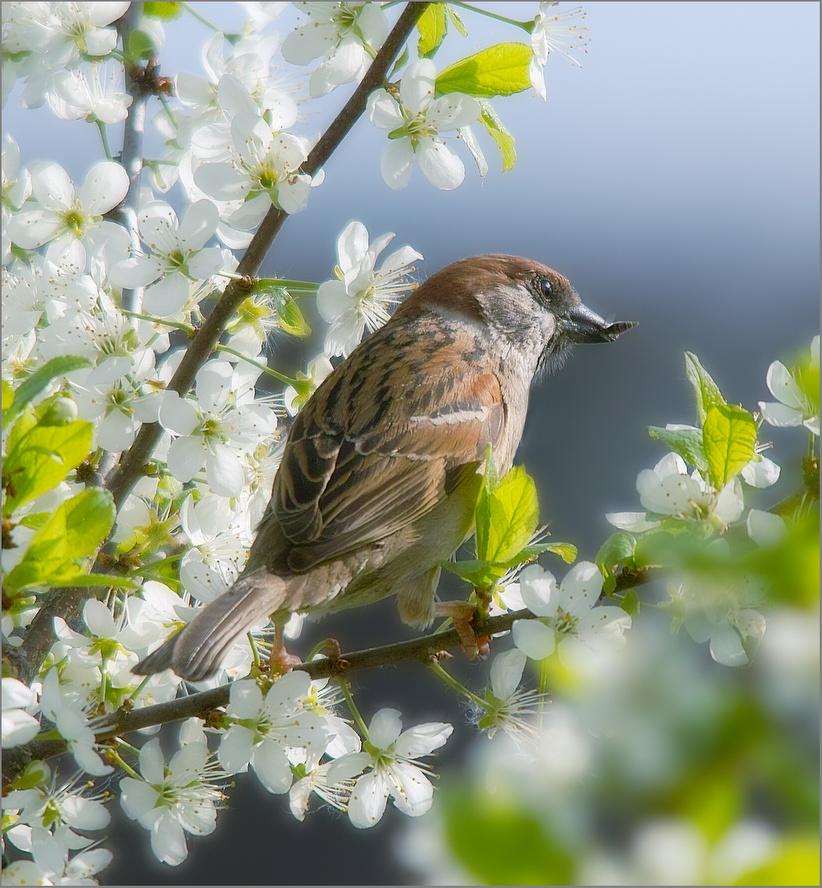 картинки весенний лес с птицами закрытые системы
