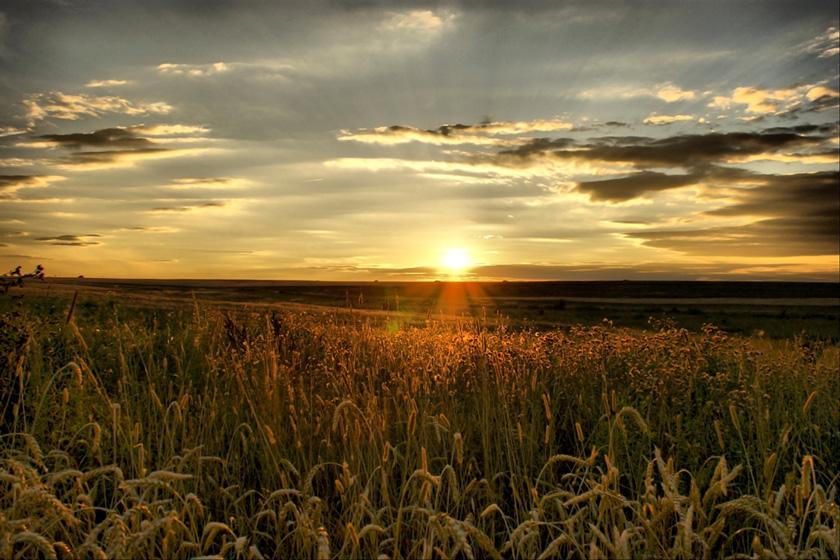 Орловская область фото полей