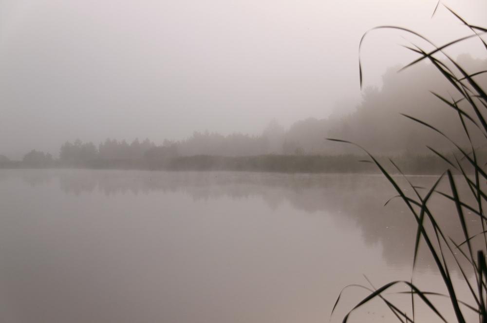 """фото """"Пробуждение"""" метки: пейзаж, вода"""