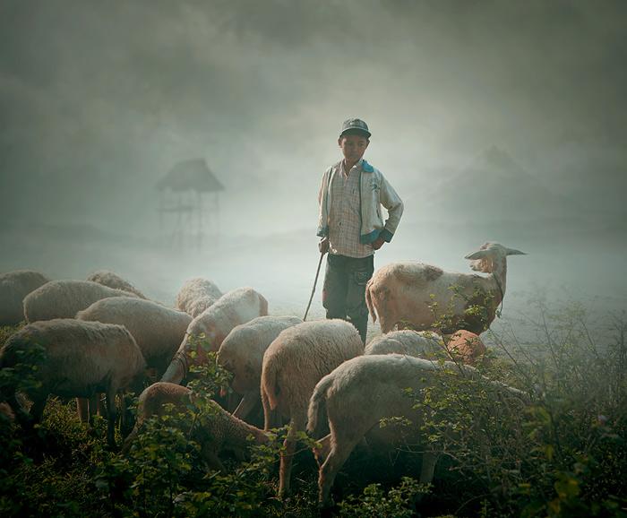 два пастуха картинки помогают преобразить