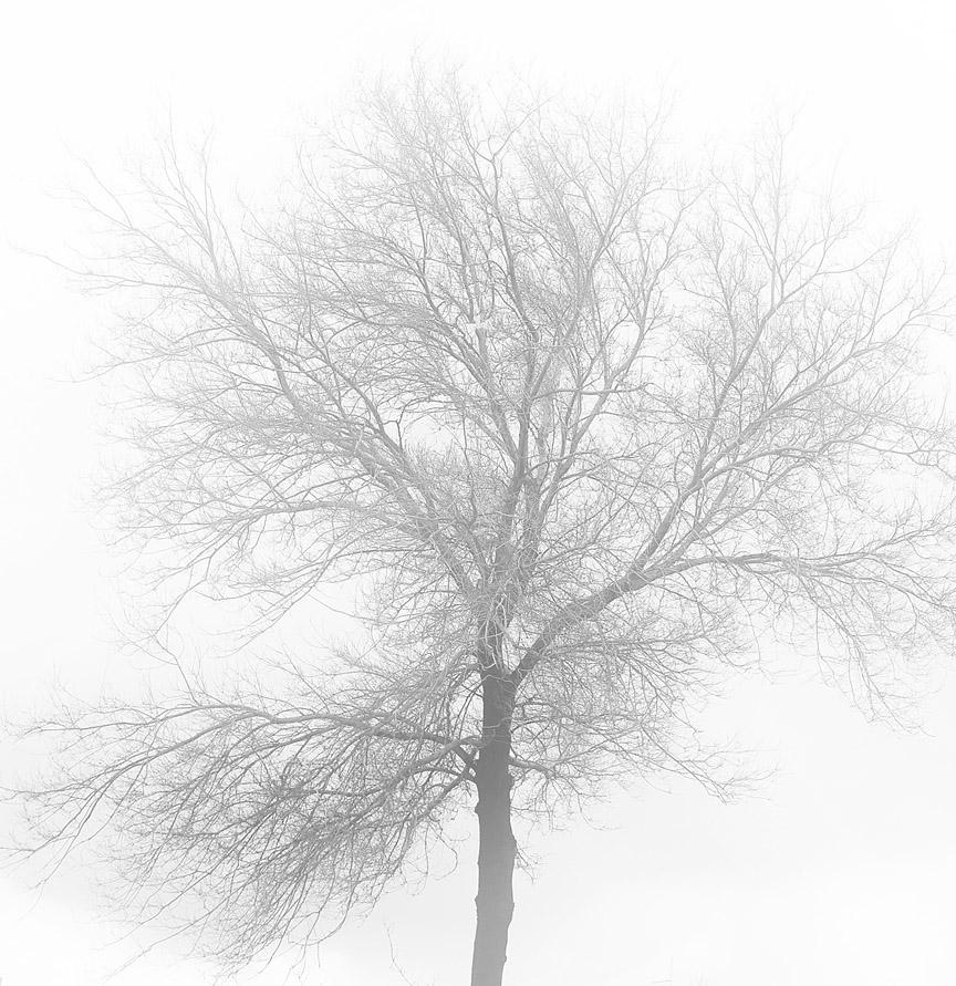 """фото """"loneliness"""" метки: пейзаж, природа,"""