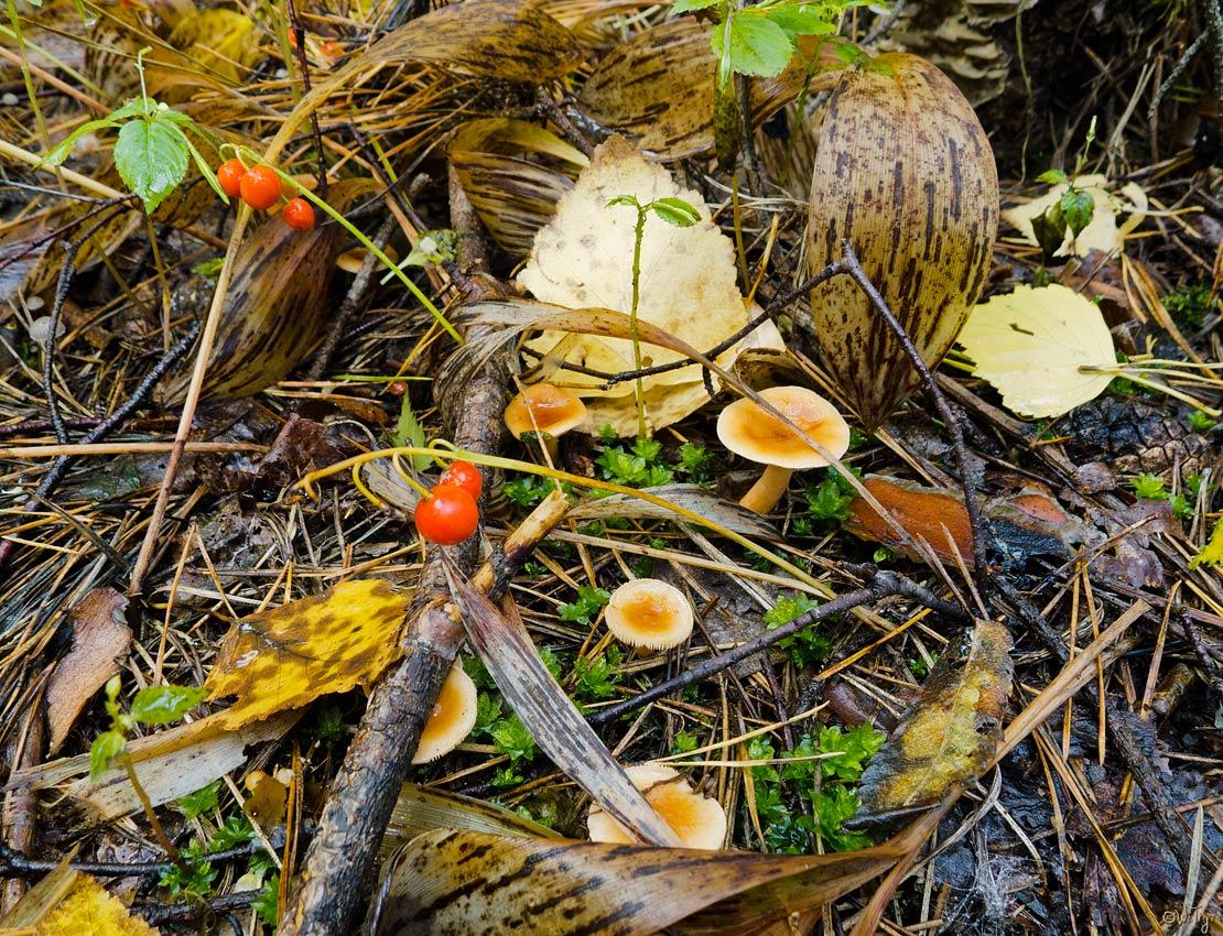 """фото """"Красный, зеленый, коричневый ..."""" метки: природа, цветы"""