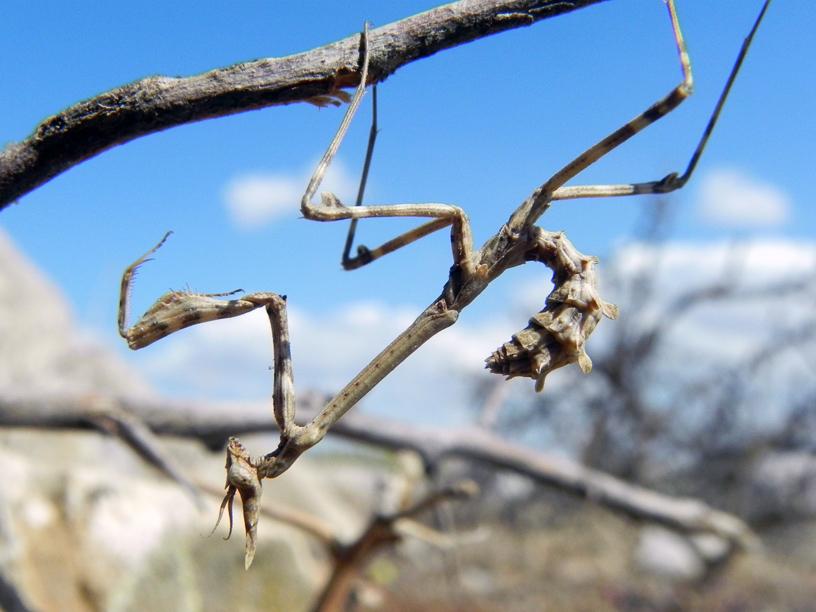 """фото """"Try all positions"""" метки: природа, макро и крупный план, насекомое"""