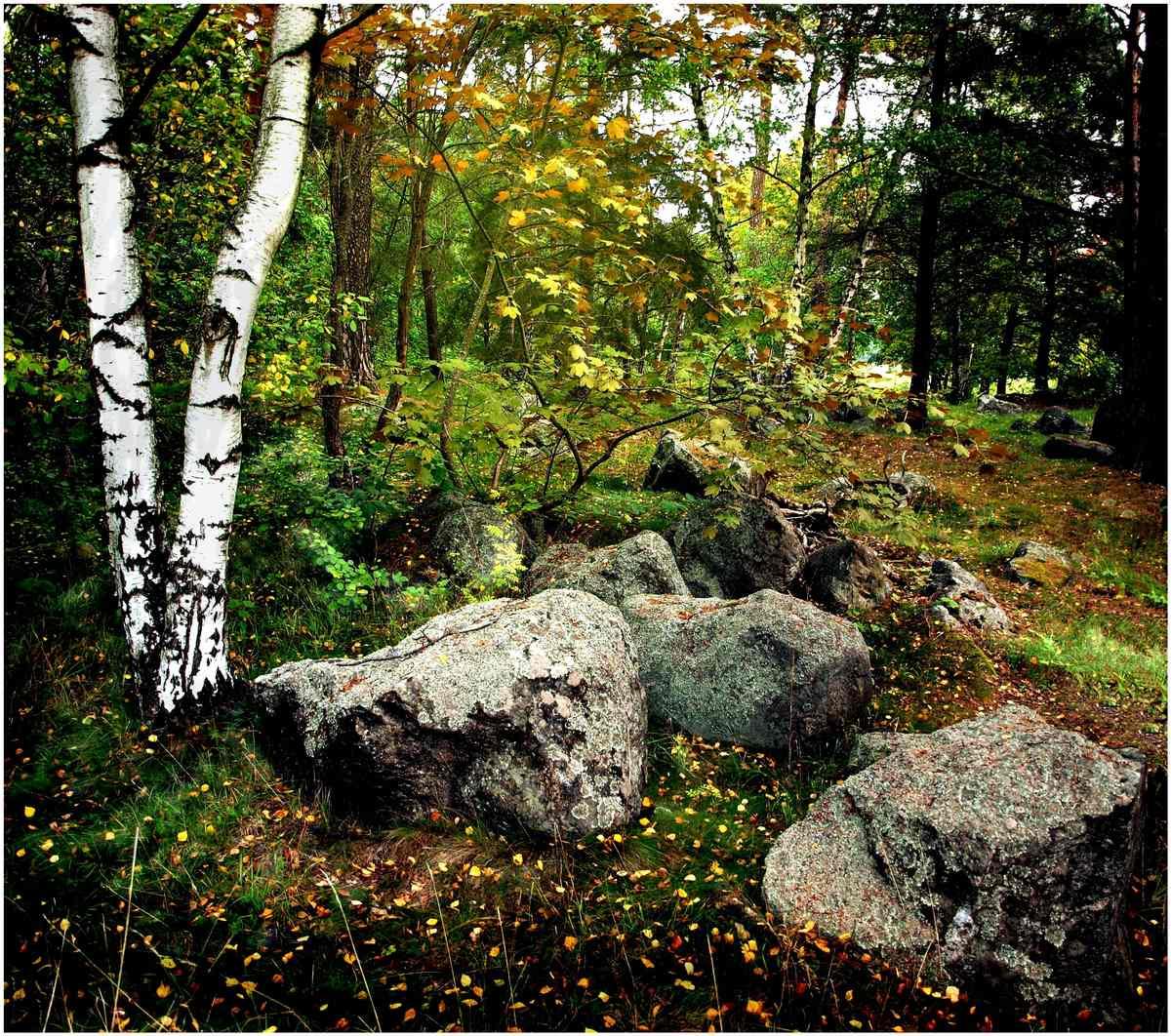 """фото """"Swedish Forest"""" метки: пейзаж, лес, осень"""